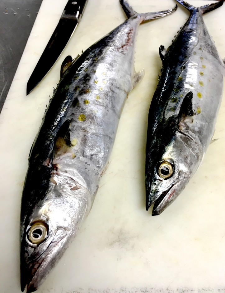 fresh mackrel